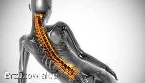 Zatrudnię fizjoterapeutę